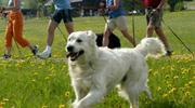 Hundeurlaub im Almfrieden