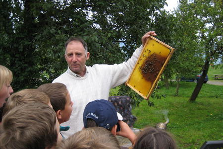 Helfenschneider Bienen