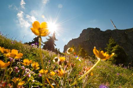Blumen am Kitzbüheler Horn im strahlenden Sonnenschein