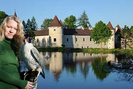 NÖ Falknerei und Greifvogelzentrum