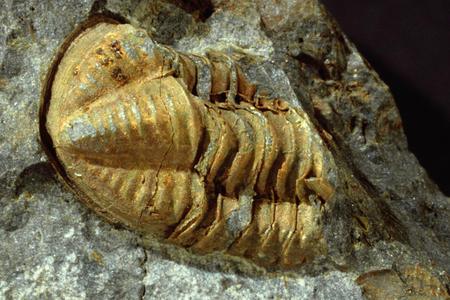 Fosilien in den Karnischen Alpen