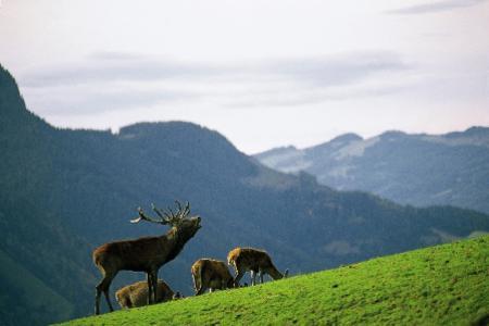 Alpenwildgehege Bucheben