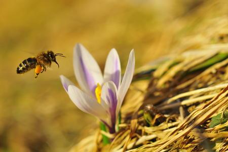 Buntes Treiben im Frühling