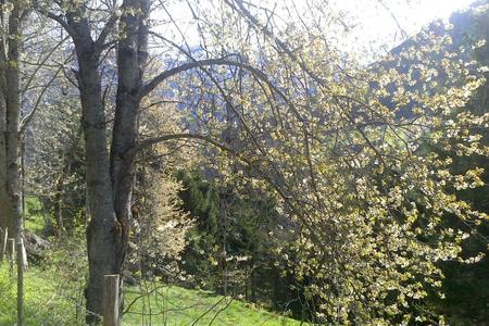 Prächtige Bäume am Höhenweg