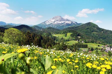 Blumenwiese bei Annaberg mit Blick auf den Ötscher