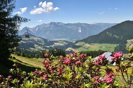 Almrosen am Wiedersbergerhorn
