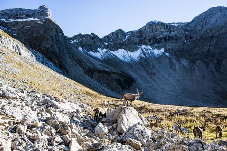 Wandern in der Ferienregion TirolWest