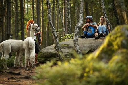 Alpakawandern im Waldviertel