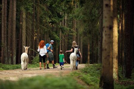 Wandern mit Alpakas im Waldviertel