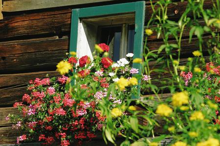 Blumenregion Wagrain-Kleinarl